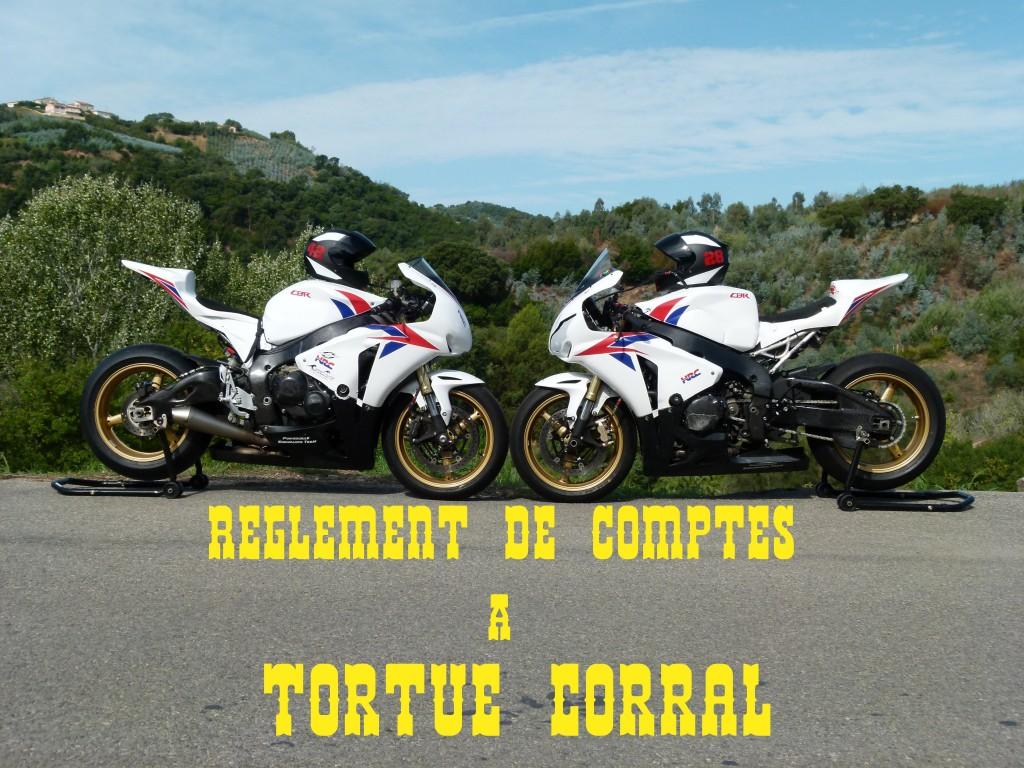[Image: TortueCorral-1024x768.jpg]